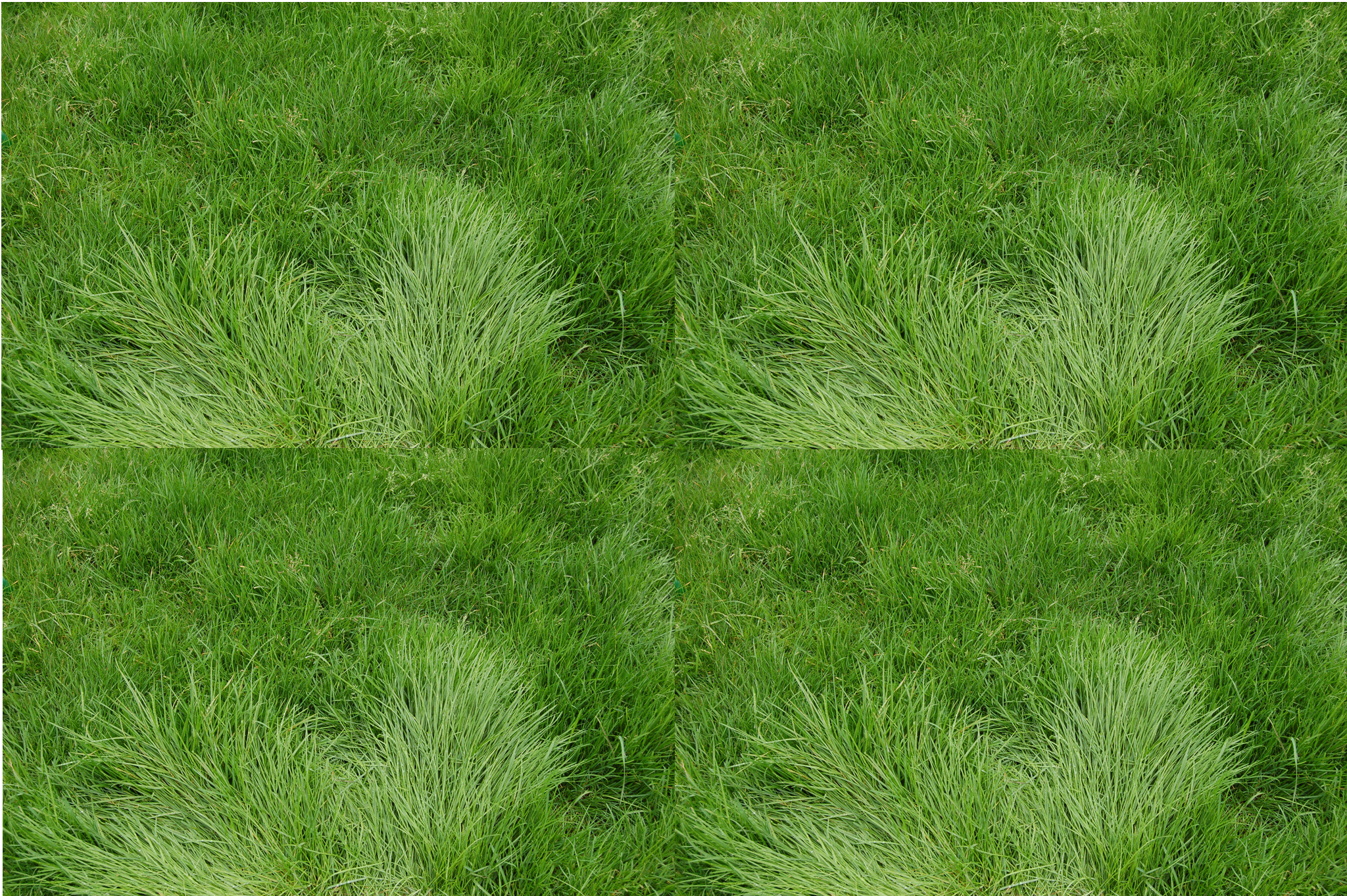 grass_texture1