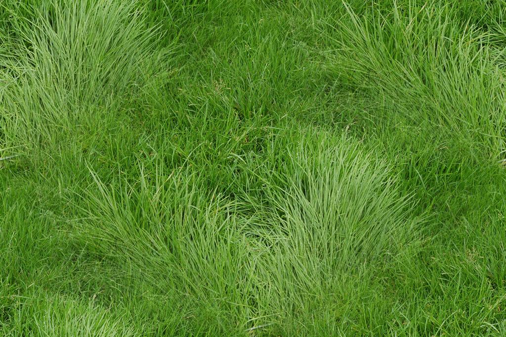 grass_texture_original